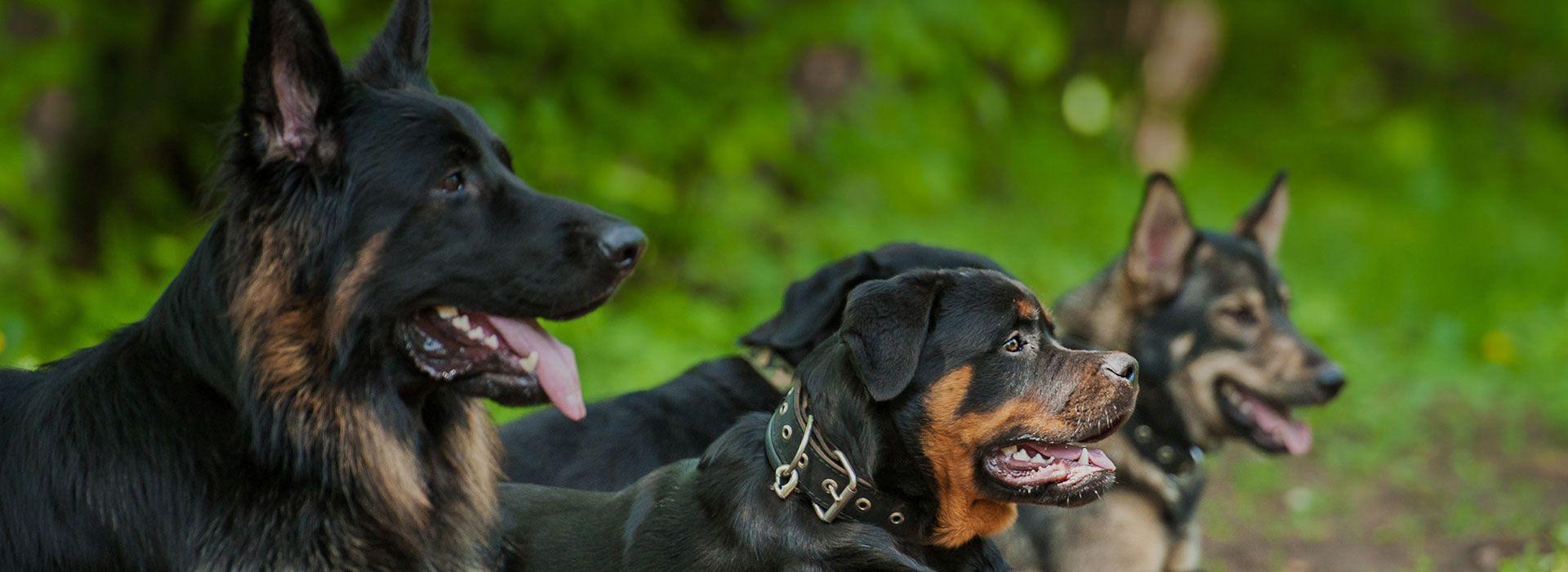 educateur canin a domicile Sarthe