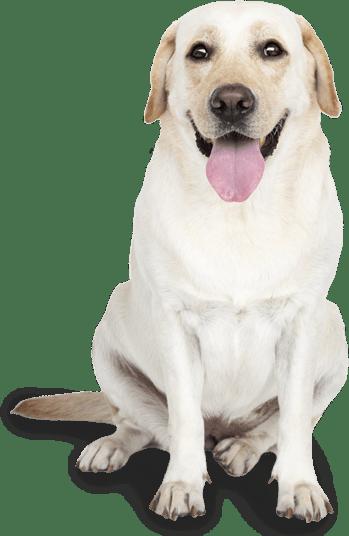 education canine Sarthe
