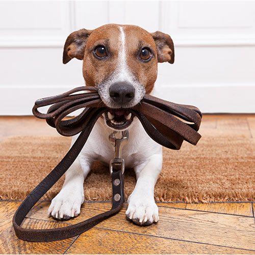 dresseur de chien a domicile