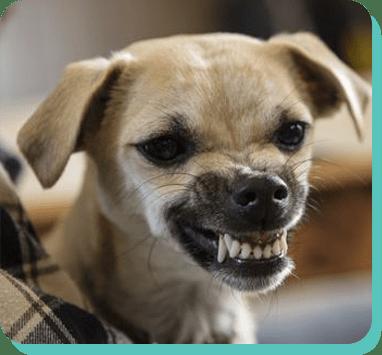 education positive chien Sarthe
