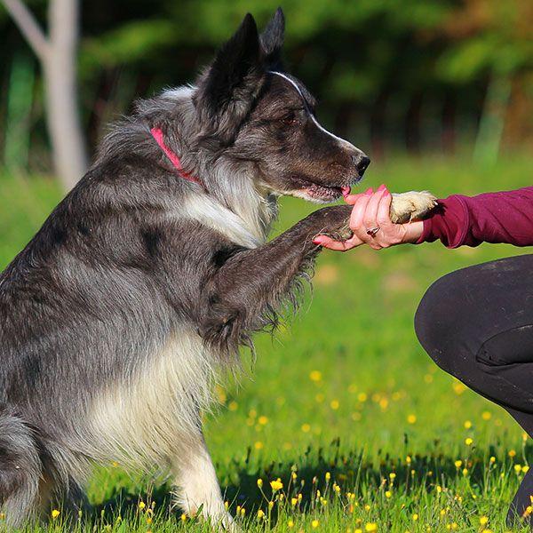 Attestation d'aptitude chien Sarthe