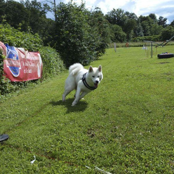 coaching canin Sarthe