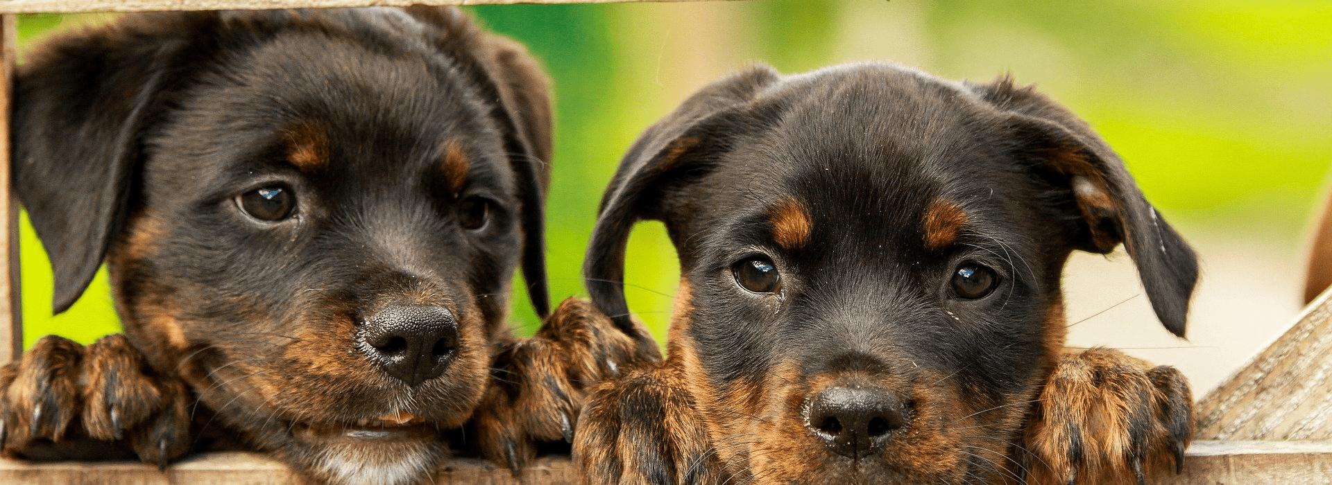 Mentions légales - Coach canin à domicile