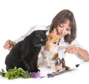 Elixirs floraux pour chat