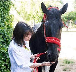 Elixirs floraux pour cheval