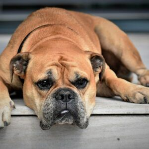 Fleurs de Bach BIO - L'épilepsie chez le chien n° 104