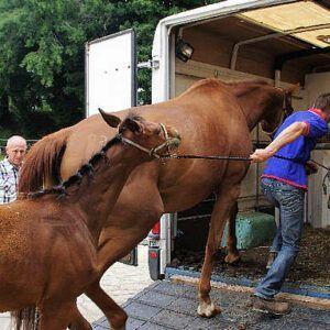 Fleurs de Bach BIO - Stress du transport chez le cheval n° 122